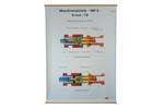 "Bolt Mechanism Chart, German (Color, 37"" High x 34"" Wide)"